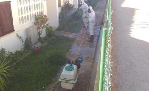 Control hormigas en urbanización 3