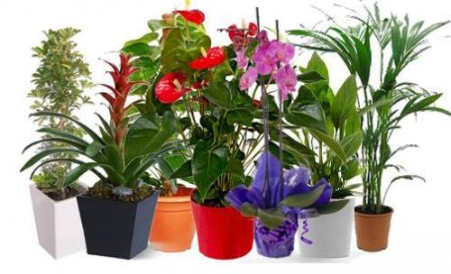 Vivero de planta para jardineria en madrid - Viveros plantas madrid ...