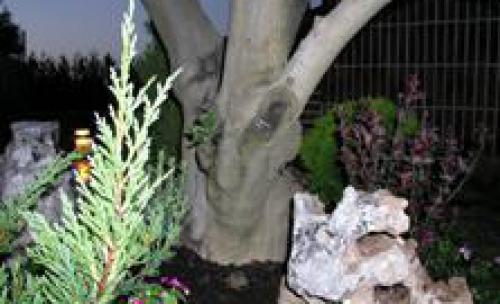 Control de plagas en vizcaya - La casa del electricista bilbao ...